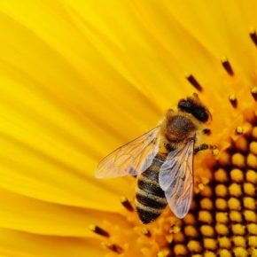 ЕС запретил пестицид компании Bayer за его вред пчелам