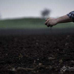 Ограничения на концентрацию земли в одни руки будет иметь три уровня - мнение