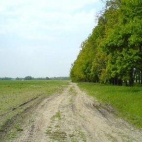 Для восстановления плодородия почв на Херсонщине высадят лесополосы