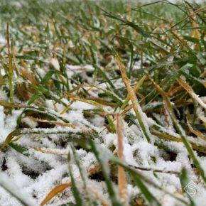 Четверть посевов озимых зерновых на Донбассе находится в слабом и сжиженном состоянии