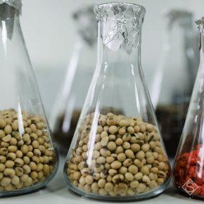 Украина имеет большой потенциал в экспорте семян в ЕС — эксперт