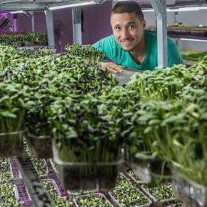 Одессит наладил бизнес по выращиванию микрозелени в вертикальной ферме
