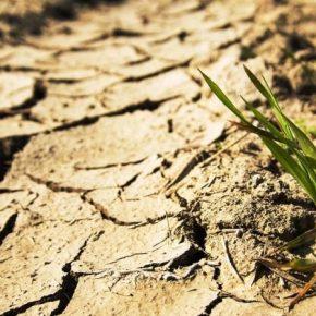 Сельскому хозяйству в Крыму предрекают упадок