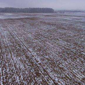 Озимым на Харьковщине продолжают вредить грызуны