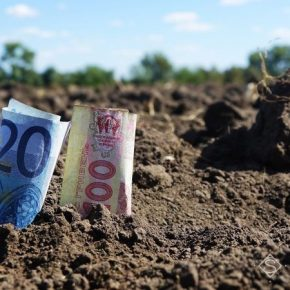 Стоимость аренды земли в Винницкой области достигла уровня ЕС