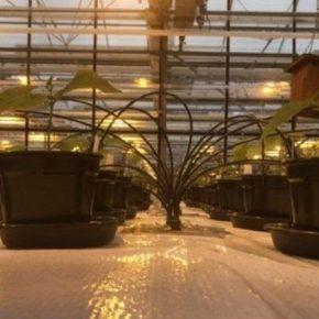 Ученые исследовали возможность выращивания растений в марсианском грунте