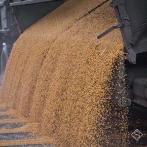 В прошлом году на Харьковщине выросла урожайность основных сельхозкультур