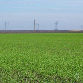 Аномально теплая зима и дефицит влаги ставят под угрозу урожай озимых на Харьковщине