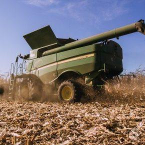 За 9 сезонов урожайность кукурузы в Украине выросла более чем в полтора раза
