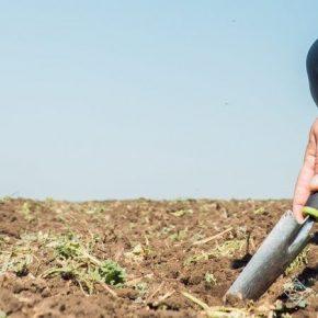 На полях Черкащины зафиксирован катастрофический дефицит влаги