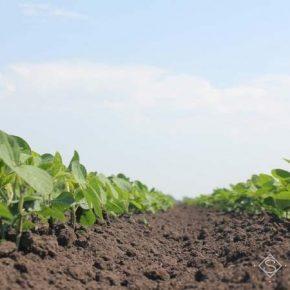 На базе Сумского НАУ исследовать перспективы выращивания сои