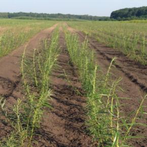Украина имеет значительный потенциал для развития биоэнергетических проектов