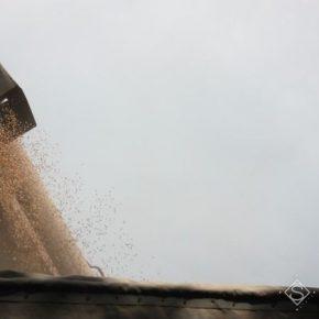 В Украине продолжают снижаться закупочные цены на кукурузу и ячмень