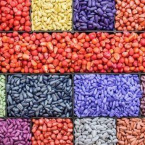 Аграриям рассказали о важности предпосевной проверки протравлении семян
