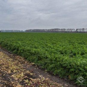 Аномальная зима на Херсонщине повлияла на сроки сева овощных культур