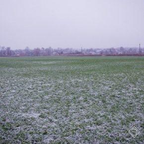 На Ровенщине хранятся малосприятливі погодные условия для перезимовки озимых культур