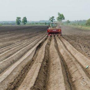 Отечественные картофелеводы не заинтересованы в росте производства — эксперты