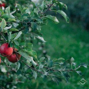 Украинские садоводы следуют трендам органического производства — мнение