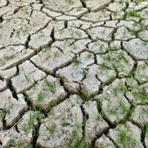 Из-за засухи и неурожая Зимбабве оказалась на грани тотального голода