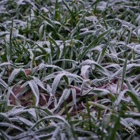 На выходные синоптики прогнозируют в Украине похолодание и заморозки