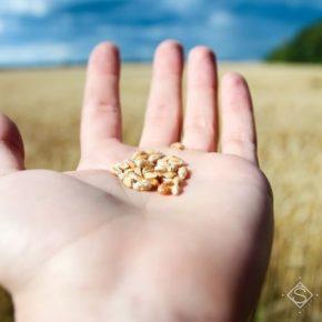 Украина вошла в ТОП-3 крупнейших поставщиков агропродукции в ЕС