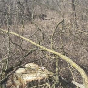 На Николаевщине продолжают уничтожать полезащитные лесополосы