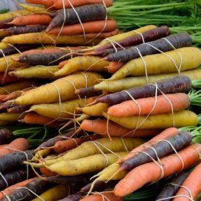 В Израиле на экспорт выращивают разноцветную морковь