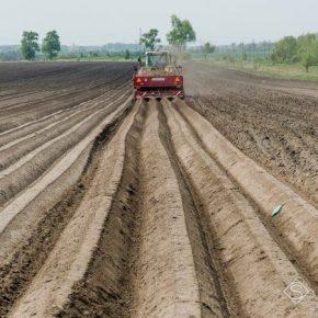 Беларусь сокращает посевные площади под картофелем