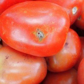 На Киевщине задержали зараженный груз импортных томатов