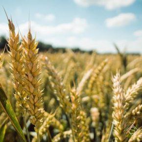 С начала года в Украине выросло сельхозпроизводство