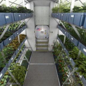 На международной космической станции сумели вырастить высококачественный урожай салата