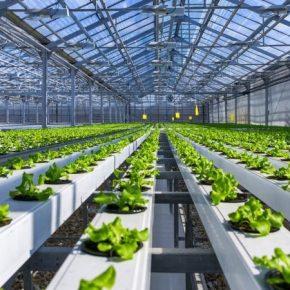 Американские фермеры хотят добиться запрета сертификации гідропонної продукции