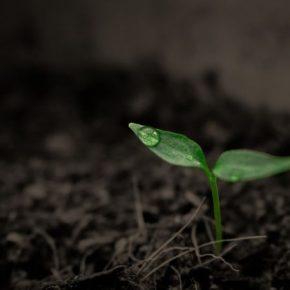 Ученые обнаружили гены, которые растения предупреждают об опасности