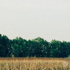 Лесополосы аграриям будут передавать в аренду на условиях обязательного ухода за насаждениями