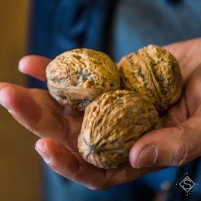 Рентабельность орехового сада может достигать 500% — мнение