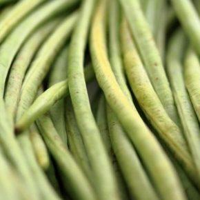Черкасский овощевод-экспериментатор выращивает китайскую вигну