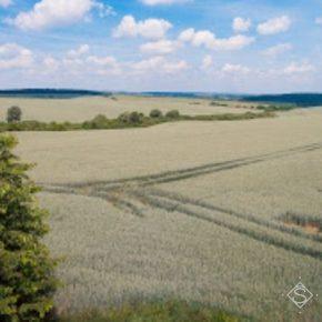 Недостаточные запасы влаги и комфортная зимовка вредителей могут привести к потерям урожая 0зимих — SuperAgronom. com