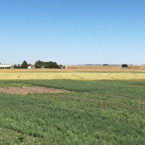 Покровные культуры способствуют улучшению состояния почв в засушливых регионах — ученые
