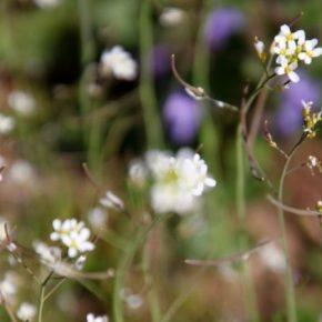 Увеличивая эффективность фотосинтеза ученые стремятся повысить урожайность культур