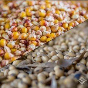 Названы причины возможного падения цен на кукурузу и сою на мировом рынке