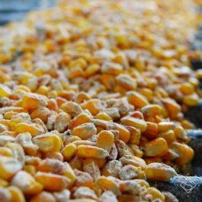 В портах Украины выросли закупочные цены на кукурузу и сою