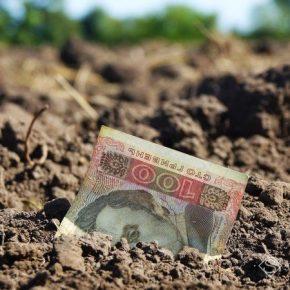 Озвучено цену сельскохозяйственной земли после запуска рынка