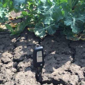 Нардеп внес предложение выделить средства из господдержки аграриев на компенсацию потерь урожая