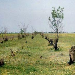 На Николаевщине зафиксирован очередной случай незаконной вырубки лесополос