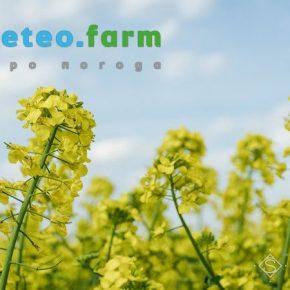 Аграриям прогнозируют теплую и дождливую неделю