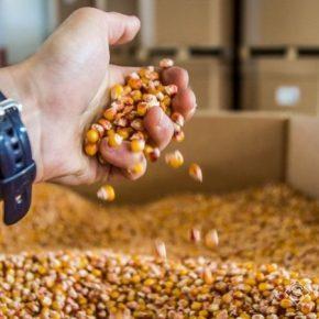 Украина заняла предпоследнее место в рейтинге стран по соотношению экспорта-импорта семена