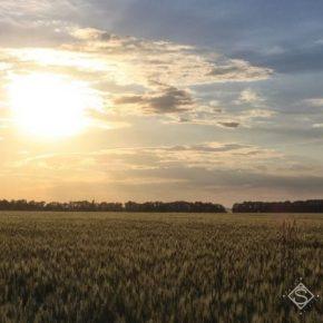 В Украине сохраняется риск усиления почвенной засухи — прогноз