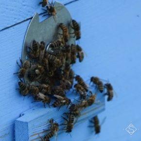 Полтавские аграрии продемонстрировали пример успешного сотрудничества с пчеловодами
