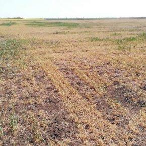 МЭРТ будет компенсировать аграриям убытки от засухи — правительственное постановление