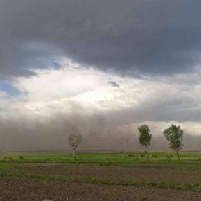 Пыльные бури нанесли ущерб сельхозкультурам на Тернопольщине